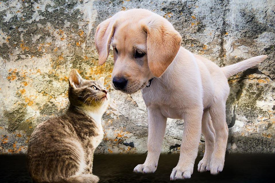 Interesantne činjenice o psima i mačkama