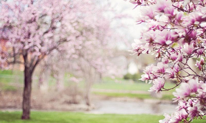 Proljeće nam je stiglo